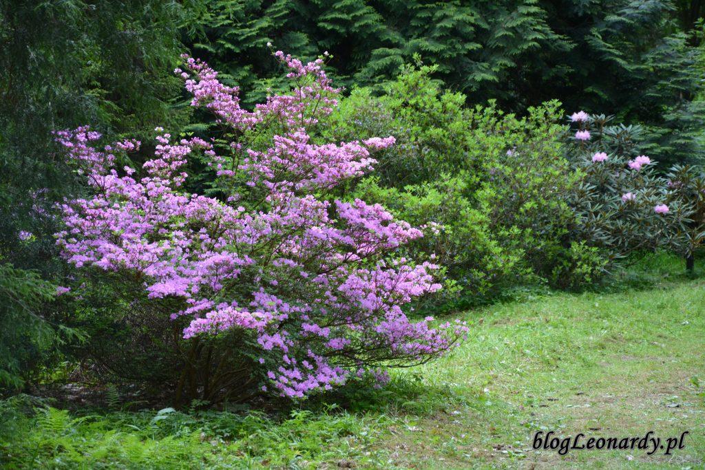 arboretum 10