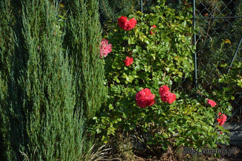 rosarium uetersen 1