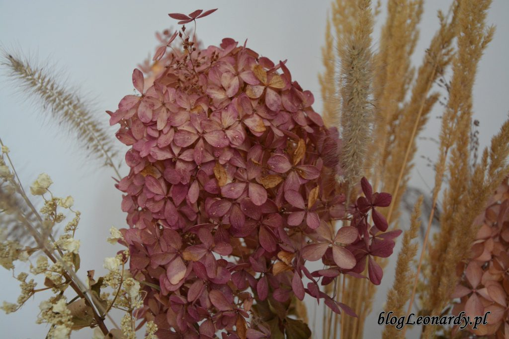kwiatostan phantom zasuszony