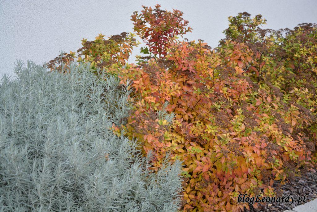 1. kolory jesieni
