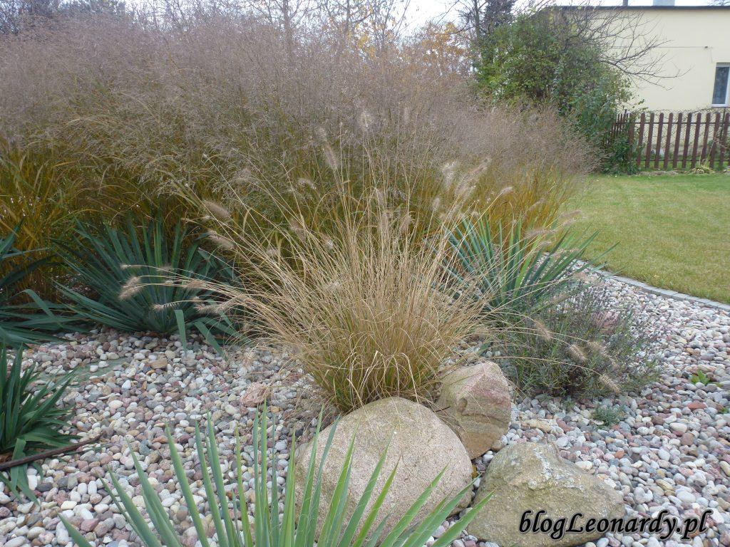 listopad i trawy
