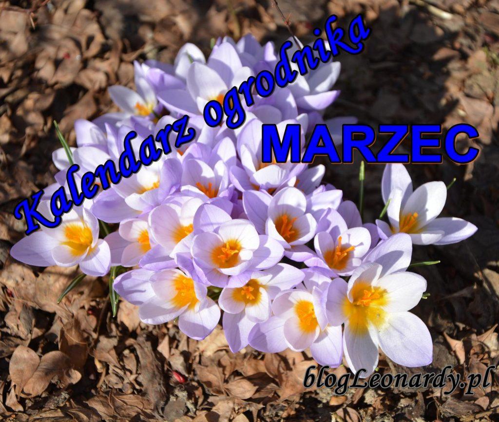 kalendarz ogrodnika marzec