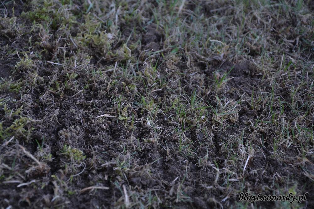 trawnik po zimie - wertykulacja