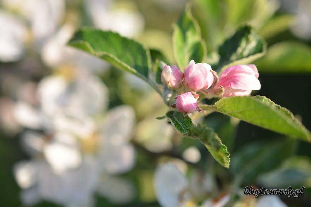 majowy ogród -DSC_0063