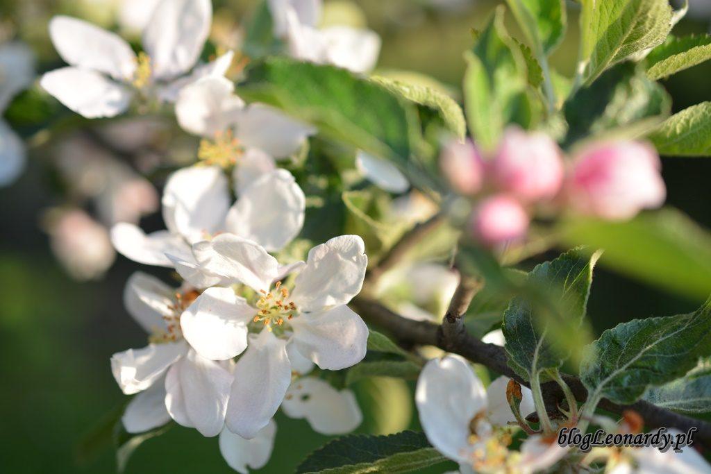 majowy ogród -DSC_0064