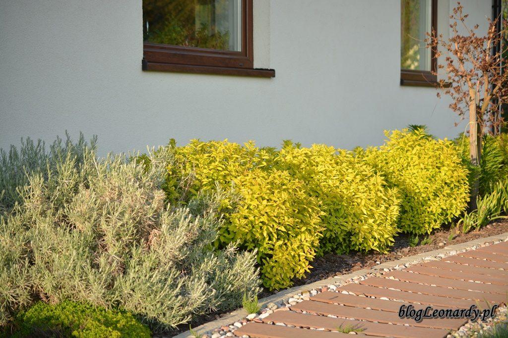 majowy ogród -DSC_0074