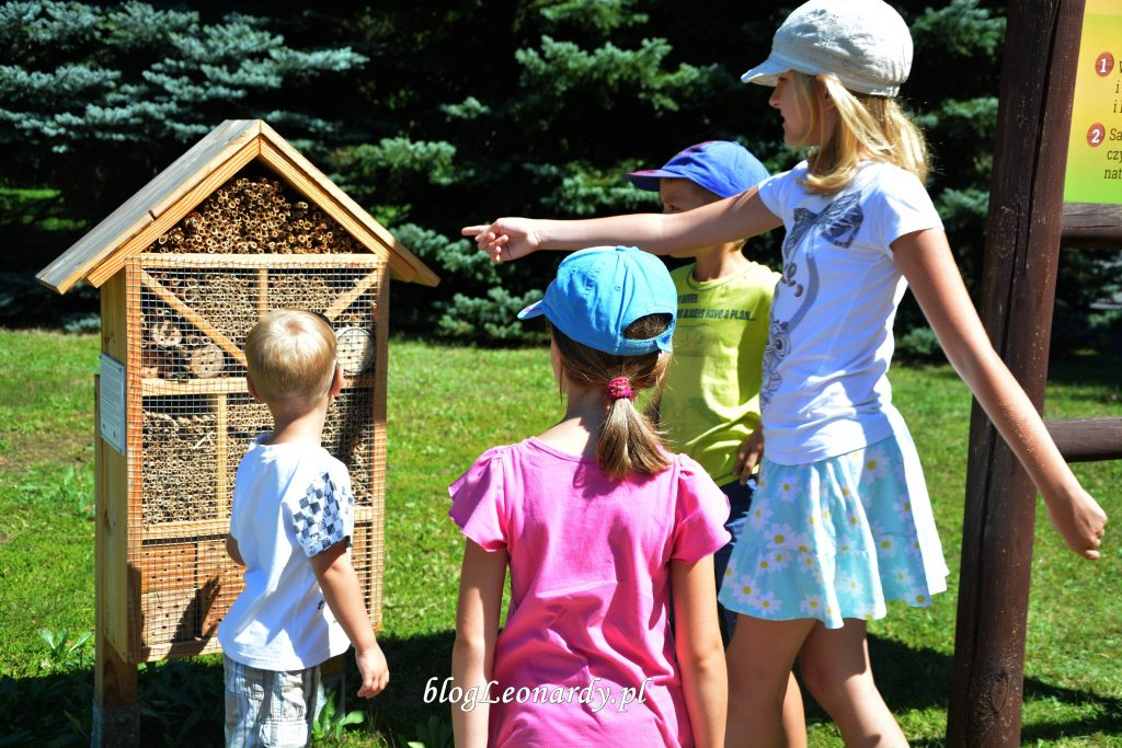 domek dla pszczół dzień pszczoły