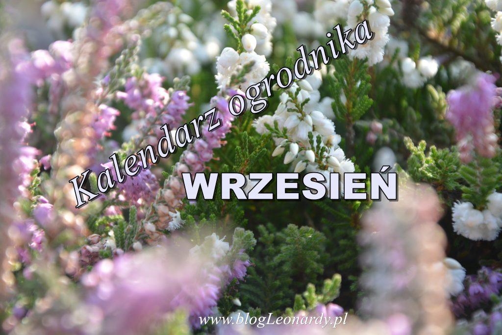 kalendarz ogrodnika - wrzesień