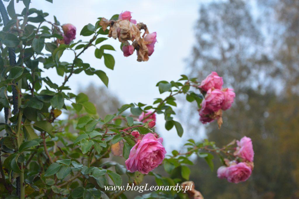 jesienna-jasmina