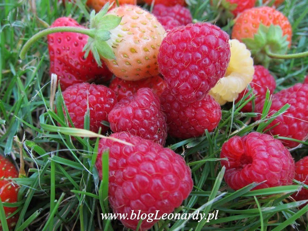 owocowy raj