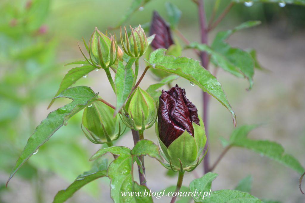 rośliny z plantpolu
