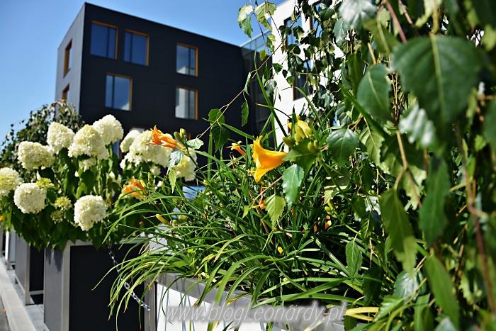 hortensje i liliowce