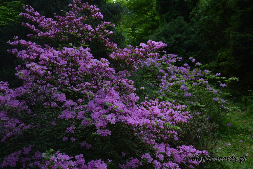 arboretum 11