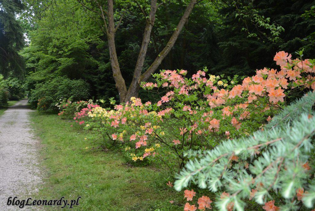 arboretum 8