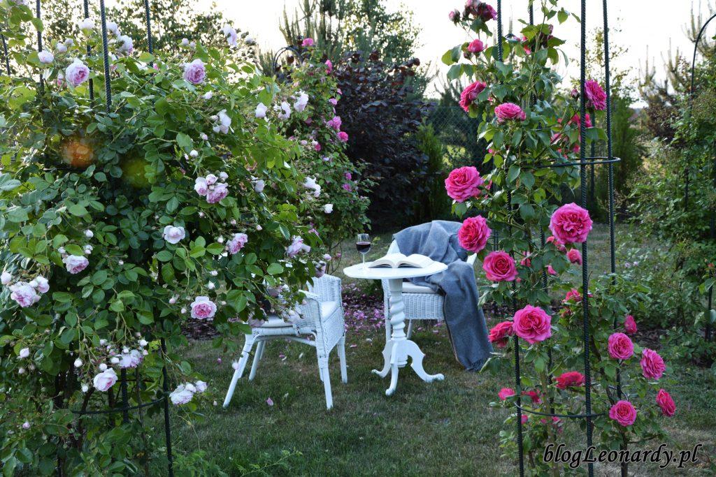 altanka różana