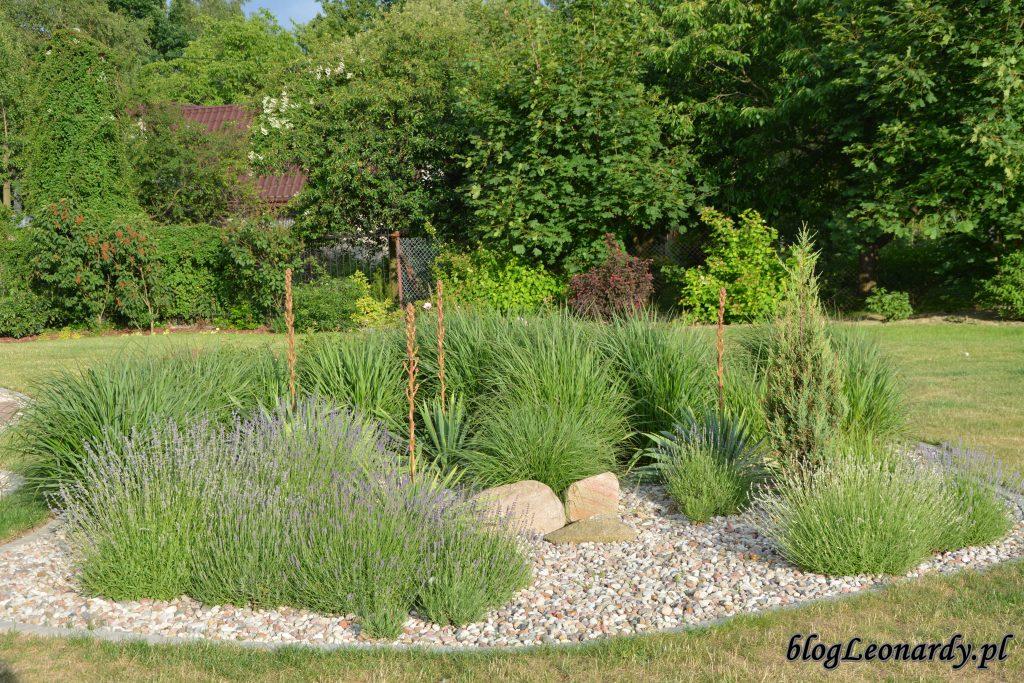 trawy 2