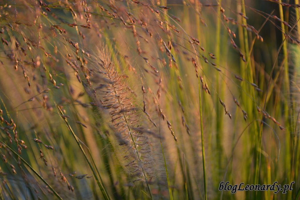 trawy 1