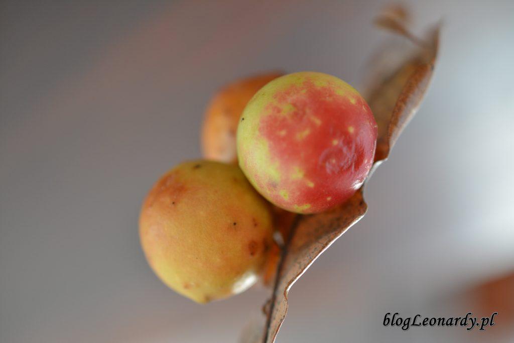 jabłka na dębie (2)