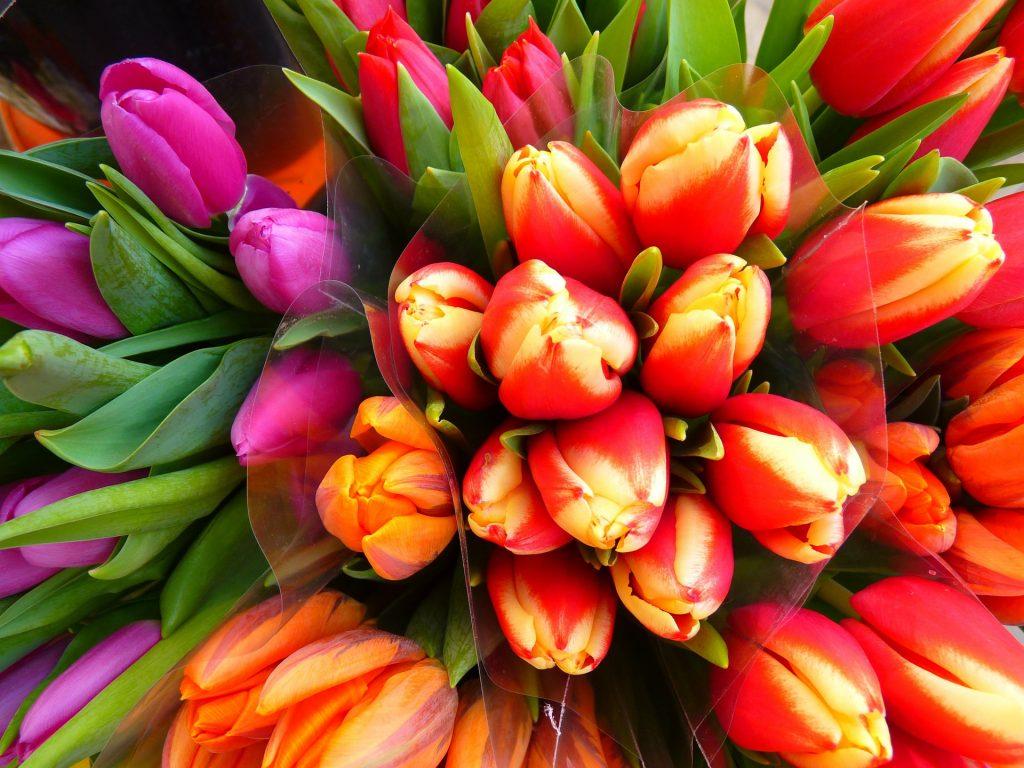 tulips-5255_1920