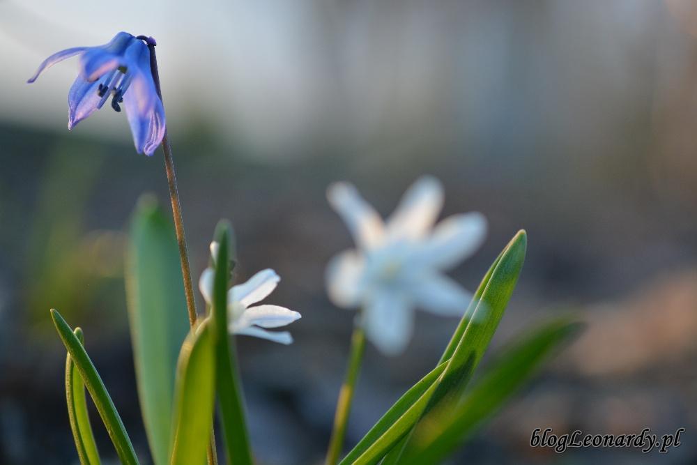 tydzień w ogrodzie -DSC_0049