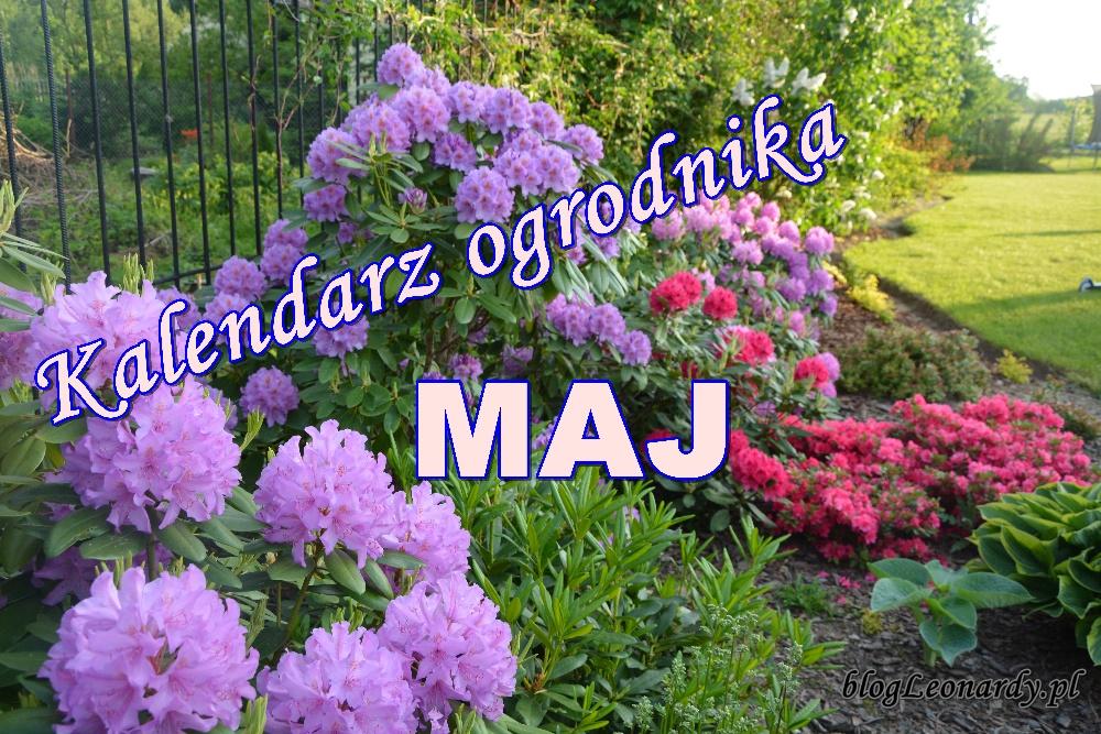 Kalendarz ogrodnika - maj
