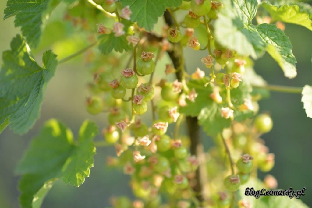 majowy ogród -DSC_0056