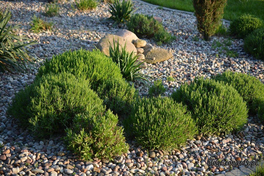 majowy ogród -DSC_0077
