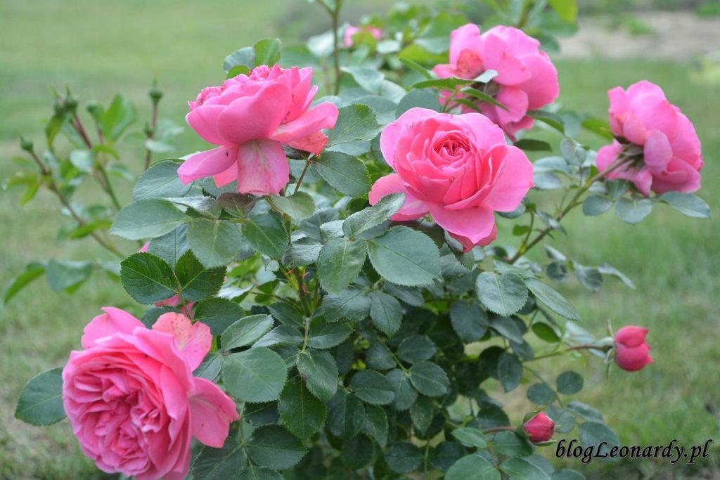 lato w ogrodzie - leonardo da vinci