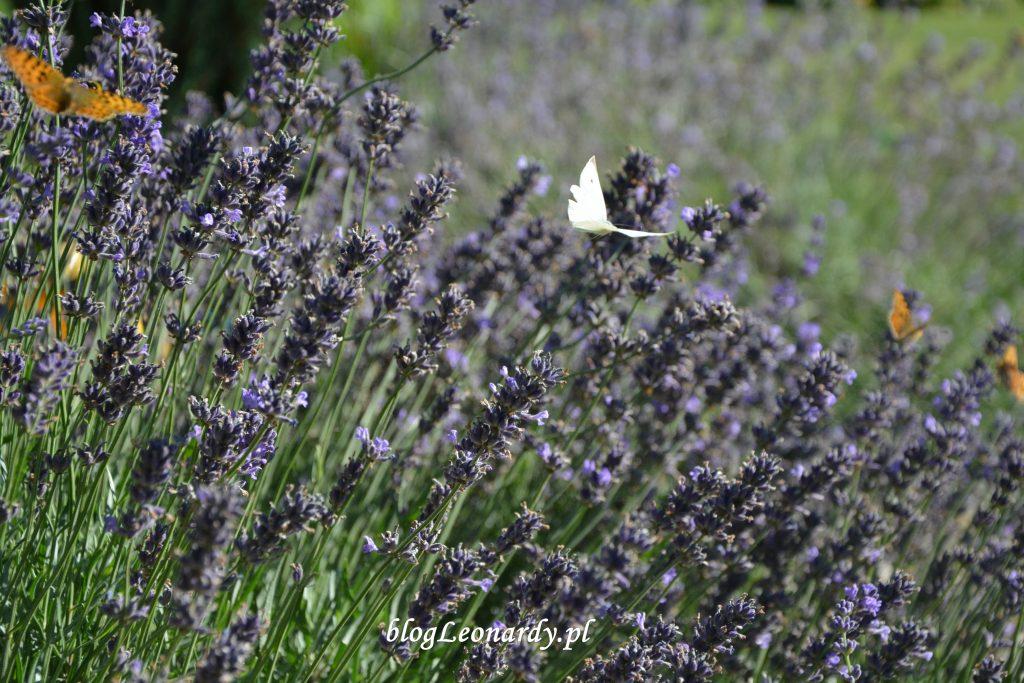 29 tydzień motyle
