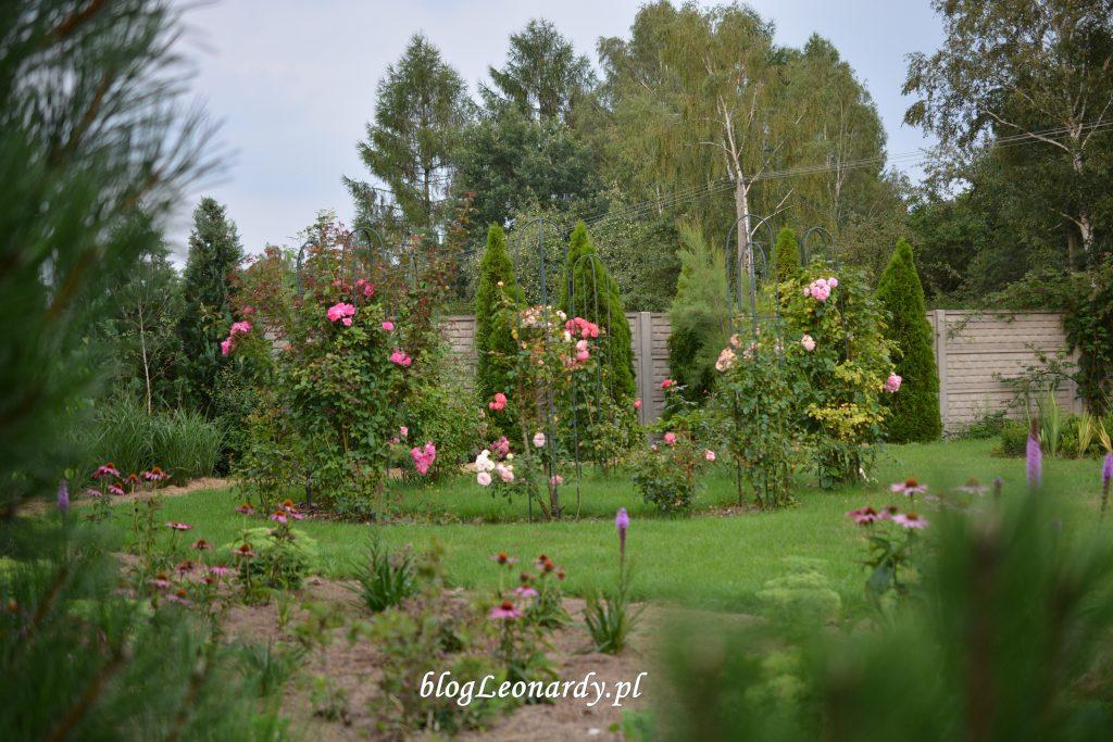 30 tydzień ogólny widok na fragment ogrodu