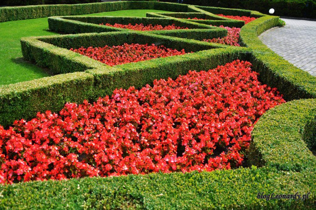 Ogród w Licheniu begonie