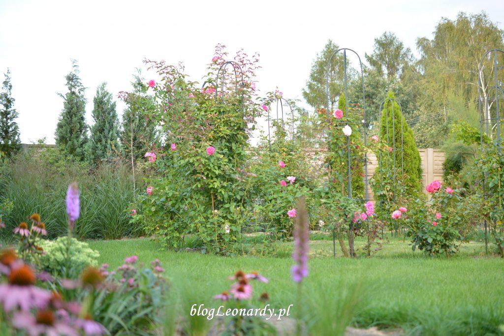rzut na ogród