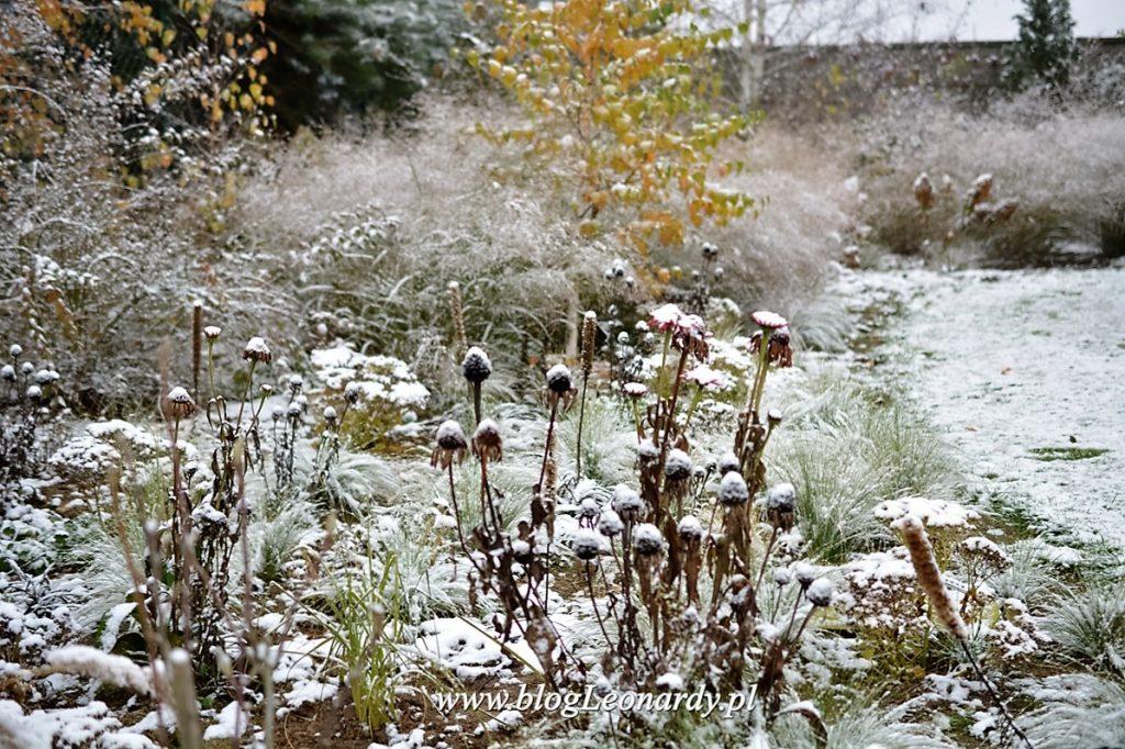 zimowe-byliny