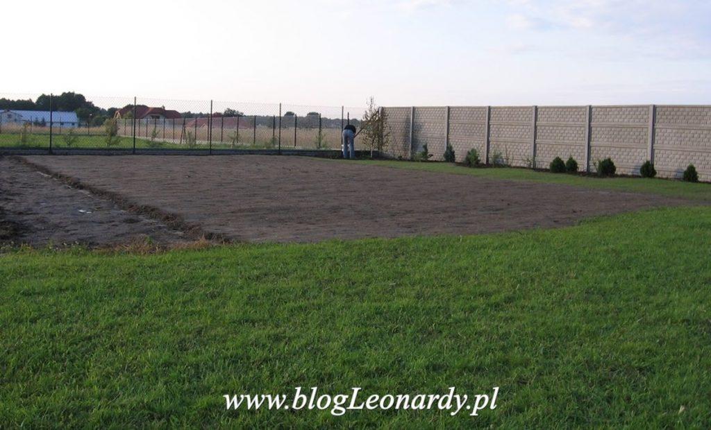 zakładanie trawnika - pierwsza trawka