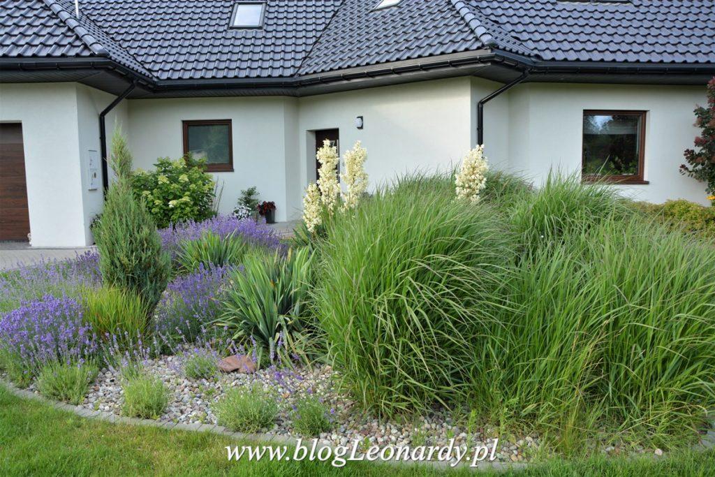 rabata na oczyszczalni - trawy ozdobne