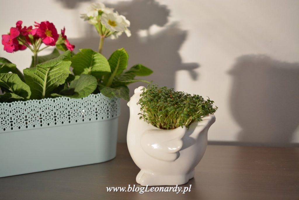 kura ceramiczna na rzeżuchę - dekoracje wielkanocne